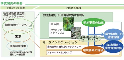 lupines2_kaihatsuzu