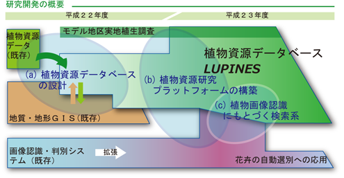 lupines_kaihatsuzu